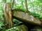 新緑の奥入瀬渓流 石ヶ戸