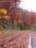 田子町 国道104号線 一面落ち葉