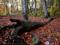 紅葉の蔦沼の森