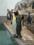 旭山動物園 キングペンギン
