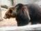 旭山動物園 ヒグマ