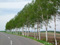 美瑛の丘 パッチワークの路